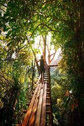 descargar epub Entre el amor y la selva – Autor Nelson Da Mota